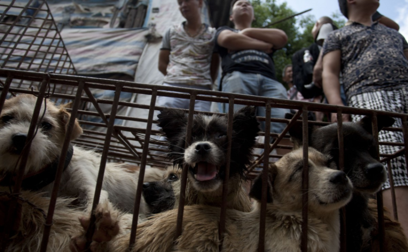 Animal Rights in China